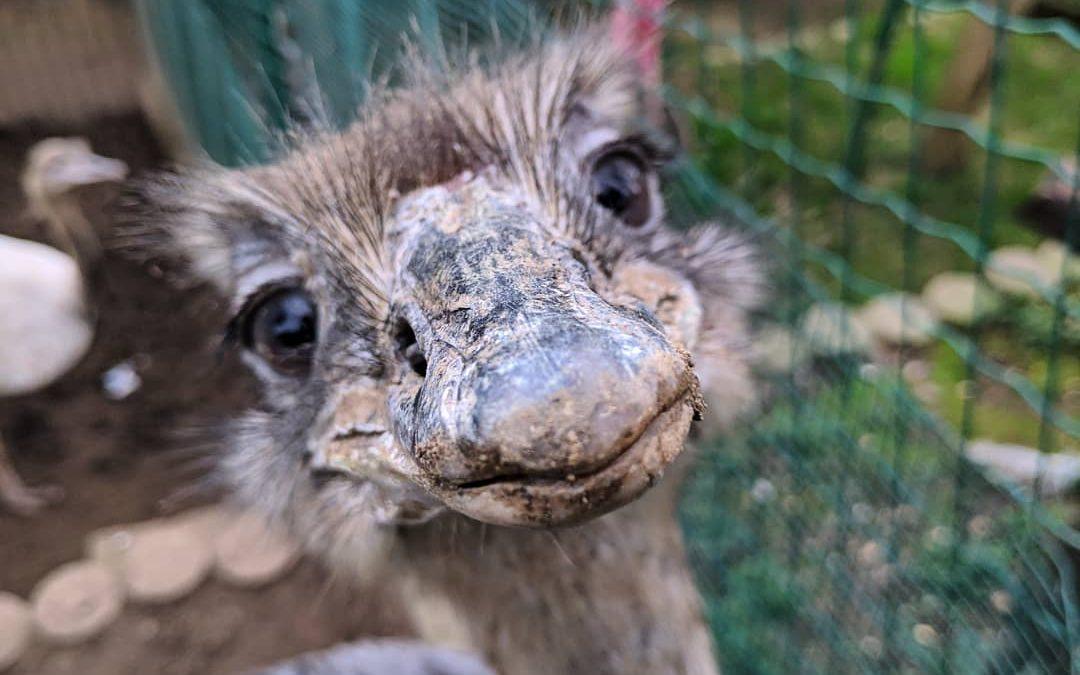 El zoo El Bosque de Oviedo, una segunda oportunidad para animales maltratados