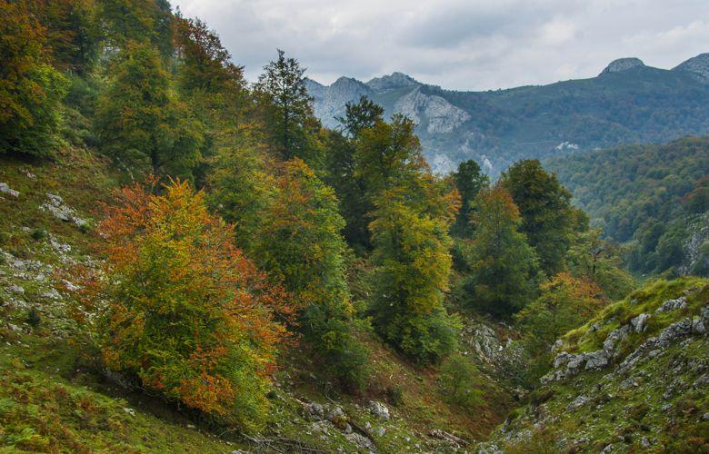 Los mejores bosques para perderse en otoño