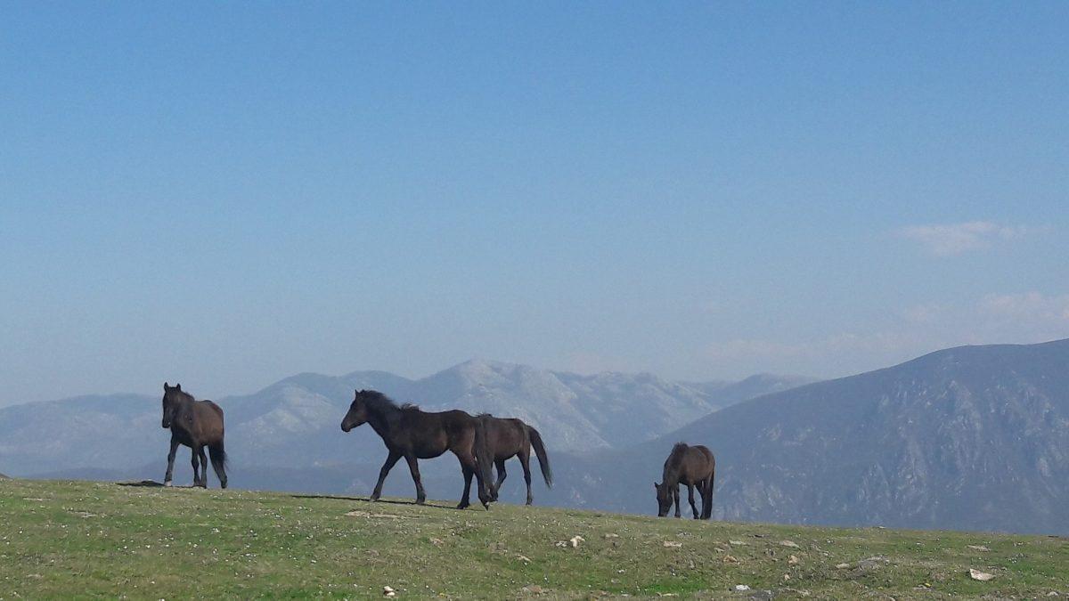 Ver Asturies a caballo: Te proponemos las mejores rutas organizadas