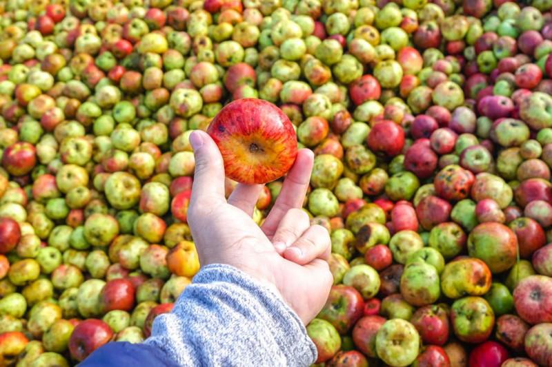 ¿Cómo se mayaba la manzana?